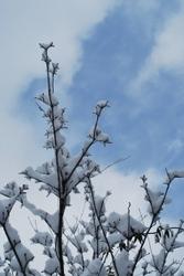 冬空.JPG